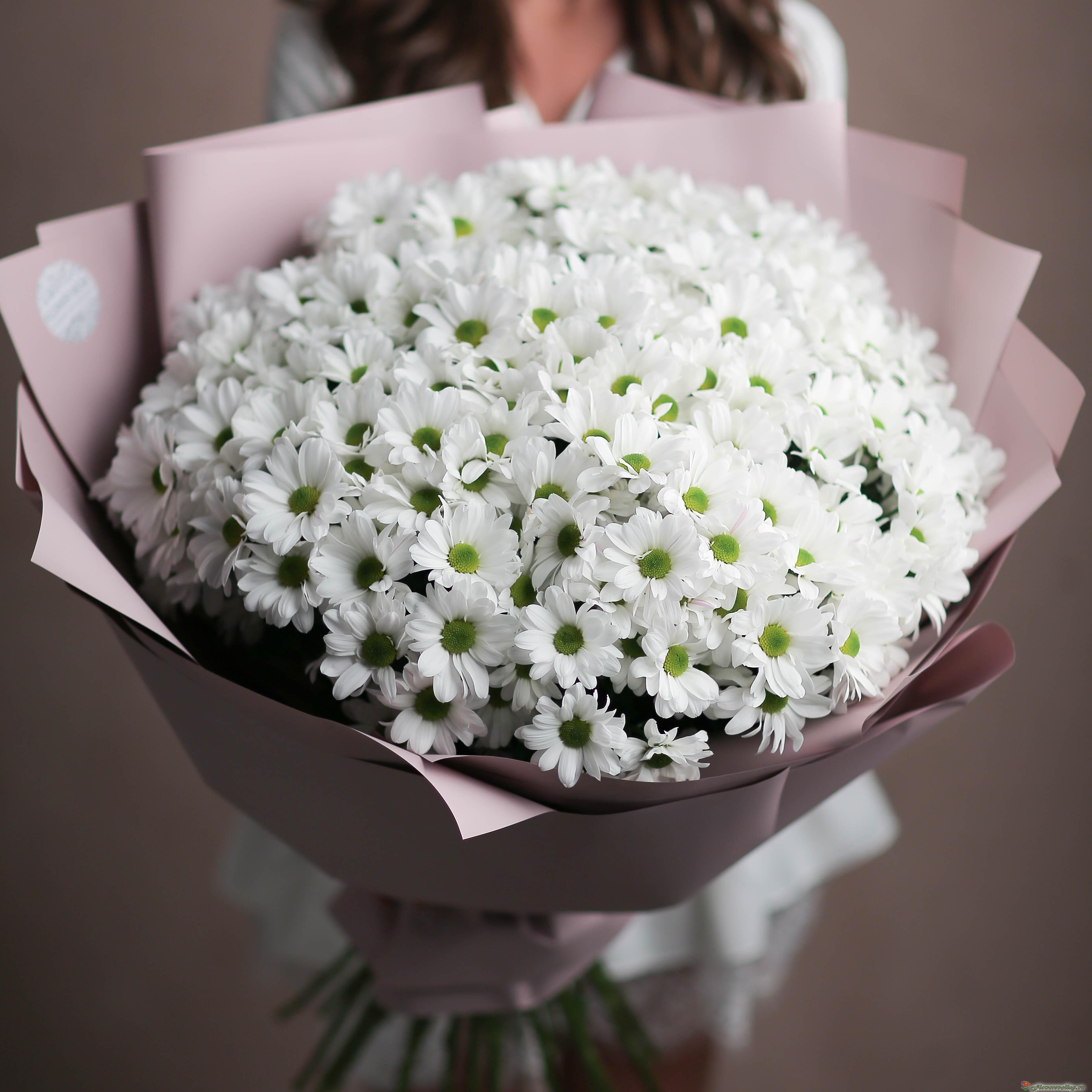 Букет из белых хризантем фото