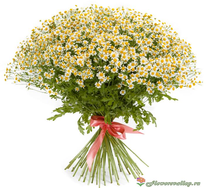 Цветы ромашки букет купить