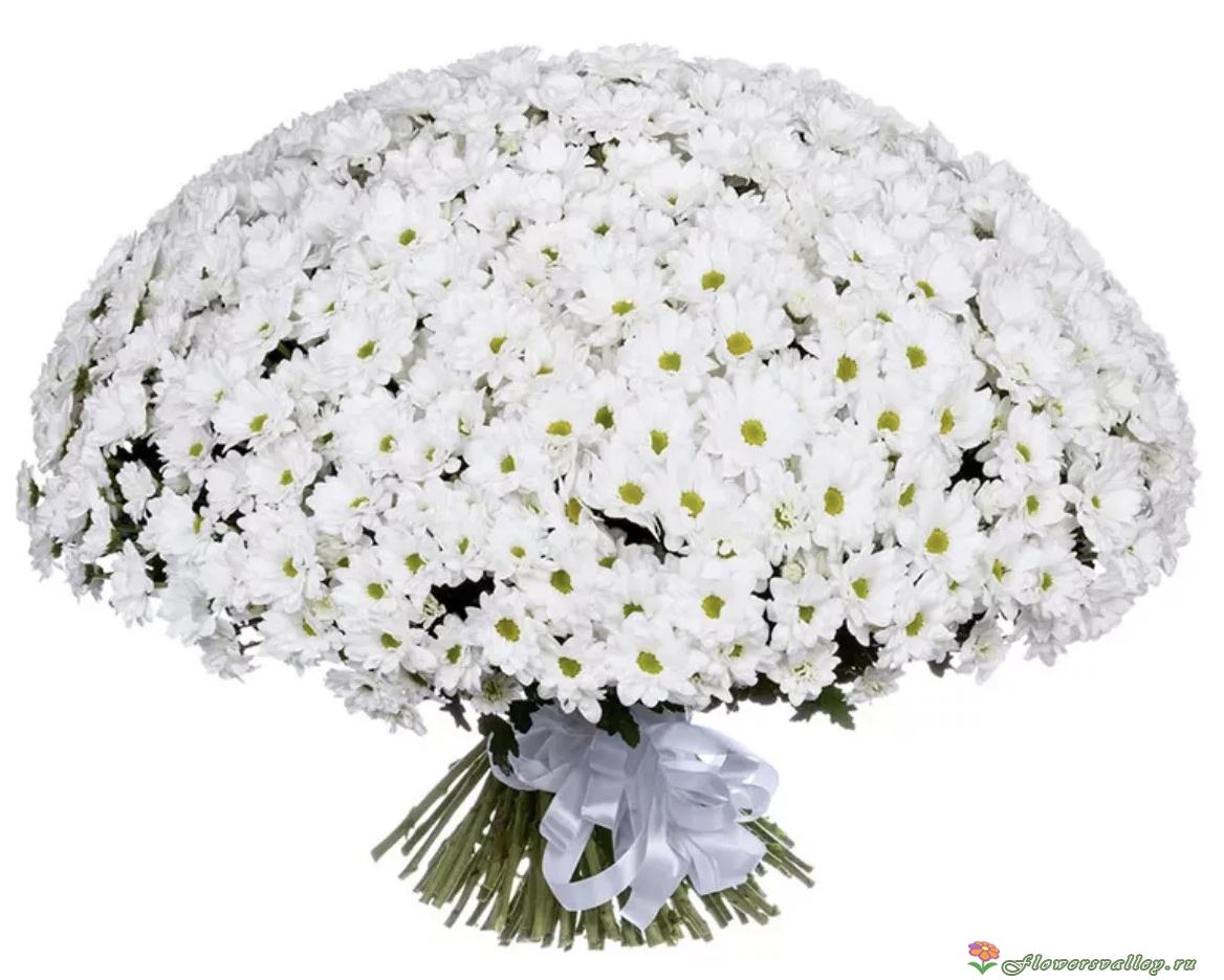 букеты из белых хризантем фото красивые истошно кричит